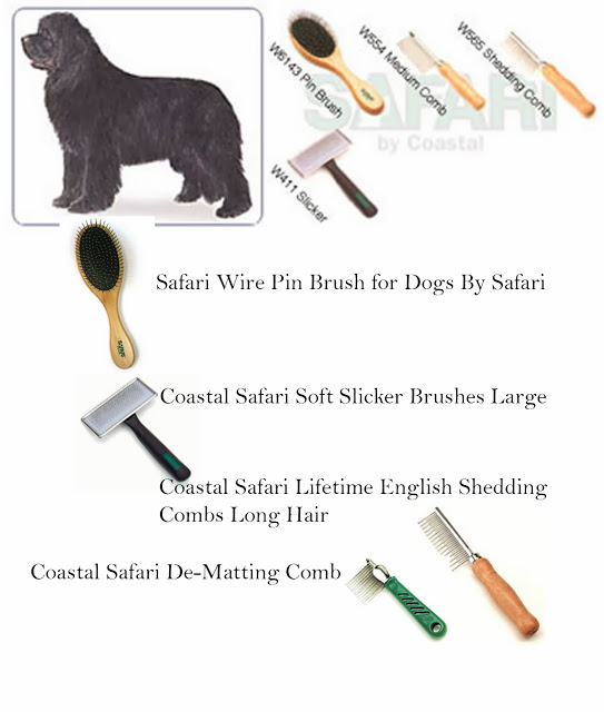 Yuppie Names For Dogs